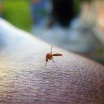 moustique demoustication